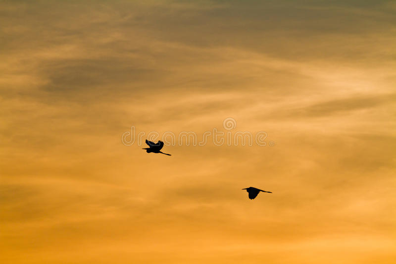 Early morning sunrise over the sea and a birds stock photo