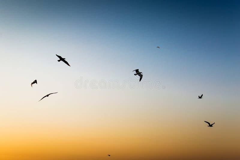Early morning sunrise over the sea stock photo