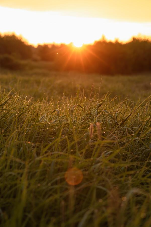 Early morning on the tips of the grass. Early morning. The rising of the sun. Warm light shimmers in the dewdrops of the field grass entangled in a thin network stock photos