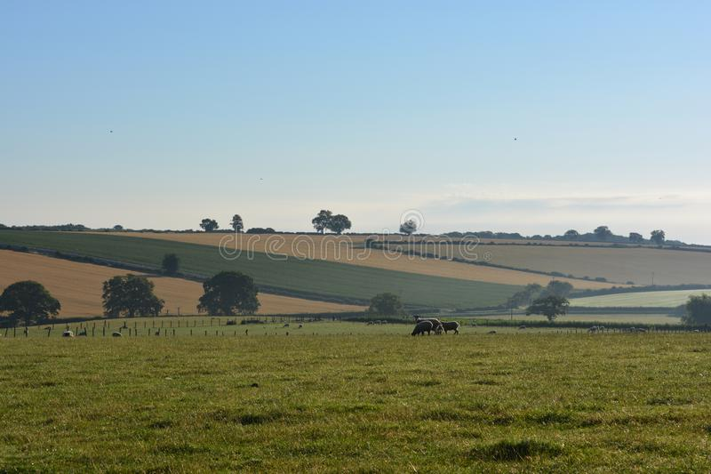 Agricultural landscape in the Howardian Hills, UK. Early morning view over the Howardian Hills near village of Gilling East in late summer. Ryedale district, N royalty free stock image