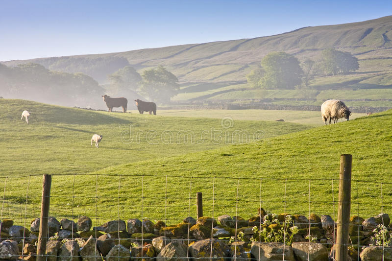 Download Early Morning In The Yorkshire Dales Stock Photo - Image: 25084312
