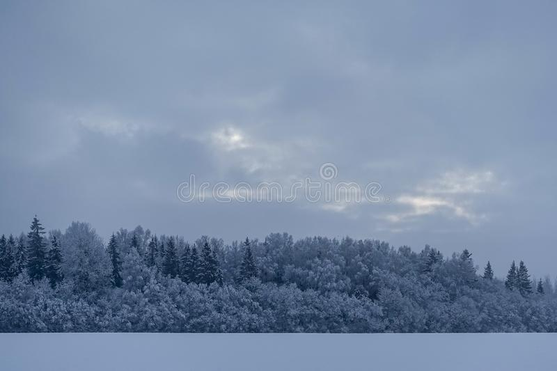 Early, mystical, overcast winter morning. A little light in the sky; in the foreground is a white field and the forest is covered with snow royalty free stock images