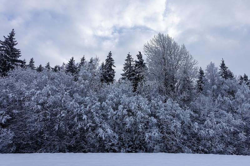 Early, mystical, overcast winter morning. A little light in the sky; in the foreground is a white field and the forest is covered with snow stock photo