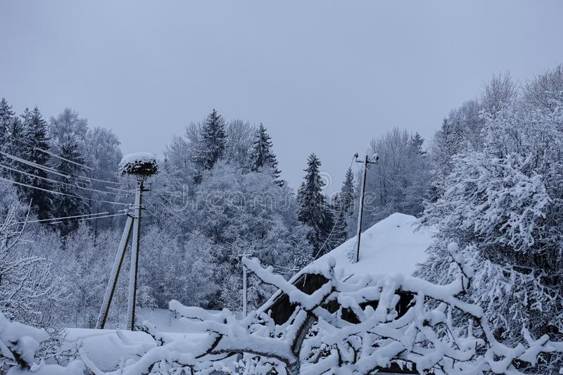 Early, mystical, overcast winter morning. Snow house roof and stork nest on the electricity pole, and perspective with snow forest royalty free stock photo