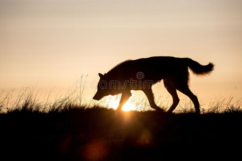 Early riser stock image