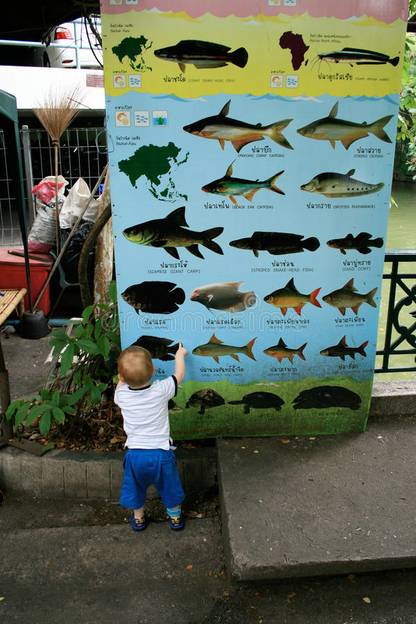 Early self-education of a child. A little two years old boy studying the species of fish on a big information board in Bangkok, Thailand royalty free stock photo