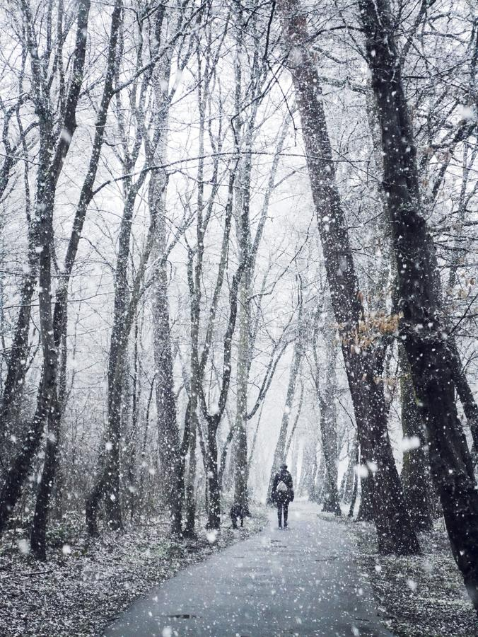 Early snow, walk in the snow, snow forest, fairy tale stock image