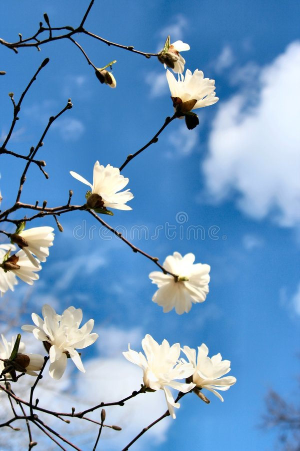 Early Spring royalty free stock photo