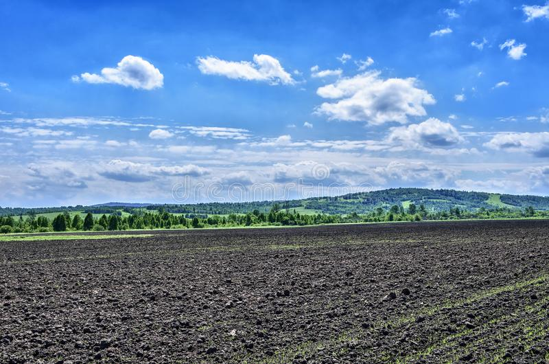 Early spring agricultural landscape with lines of green cereals sprouts on plowed  ground stock photography