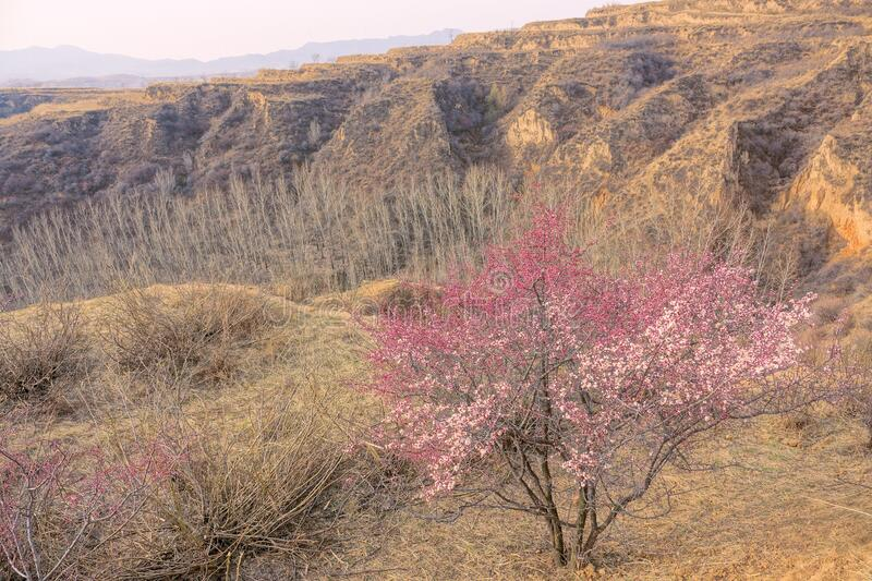 Early spring. The landscape of early spring of loess plateau in North China royalty free stock images