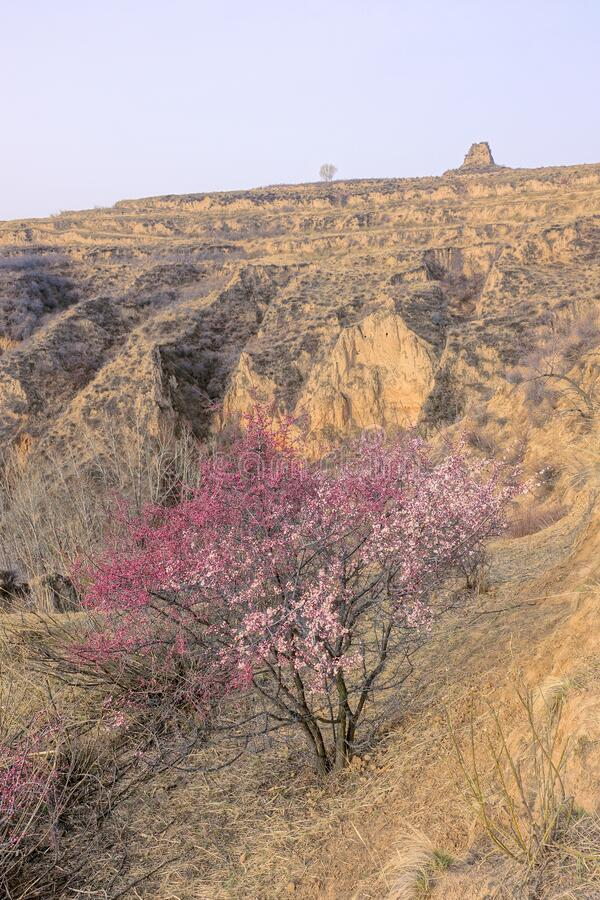 Early spring. The landscape of early spring of loess plateau in North China royalty free stock photos