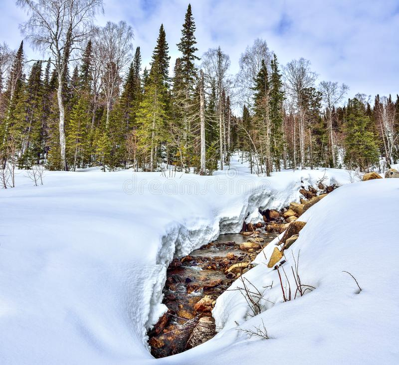 Early spring landscape in forest with melting snow and brook royalty free stock photos