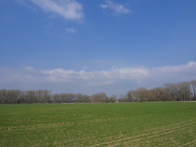 Early spring landscape with green sprouts sown field, bare trees and blue sky, white clouds backgroud, copy space,. Vivid colors stock photography