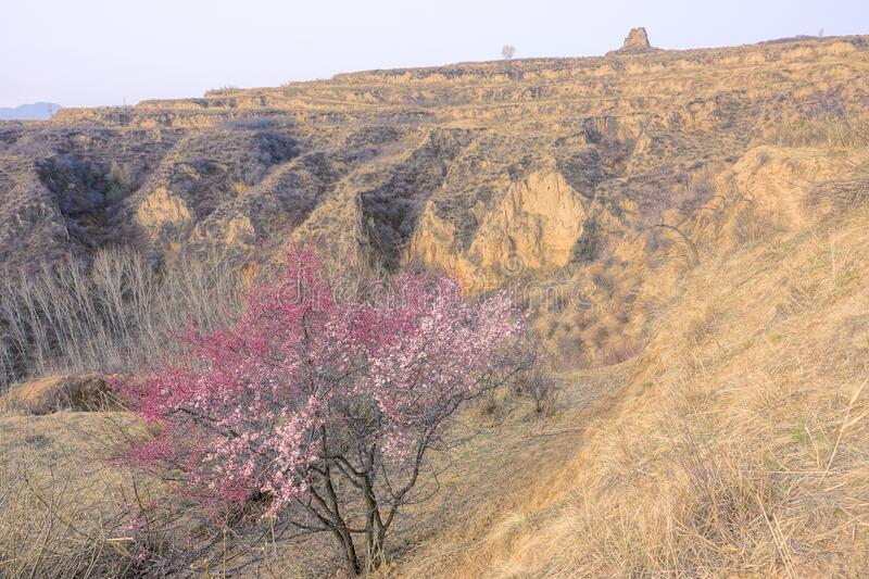 Early spring. The landscape of early spring of loess plateau in North China stock photos