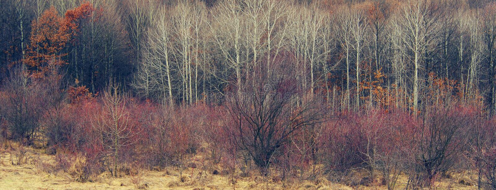 Early spring landscape in National Park Retezat. royalty free stock photography