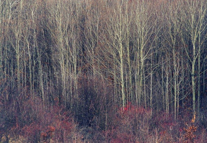 Early spring landscape in National Park Retezat. stock image