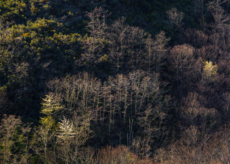 Early spring late afternoom light. In the forests of the Courel Range, Lugo, Galicia royalty free stock photo