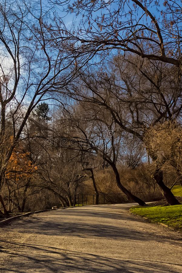 Early spring in the park. Bare trees and the road stock photo