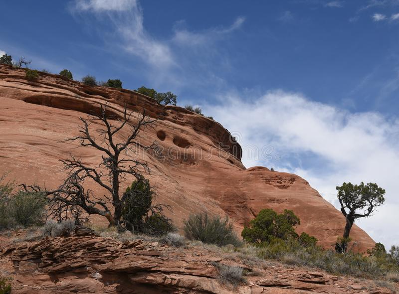 Sandstone Mountain Top. This is an early Spring picture of a sandstone Mountain Top featuring a living and dead Common Juniper Trees in Colorado National royalty free stock photos