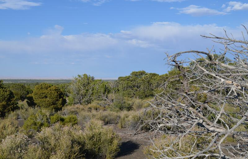 Early Summer in Arizona: Downed Dead Treetop in Foreground with Painted Desert in the Distance Near Wupatki National Monument stock photos