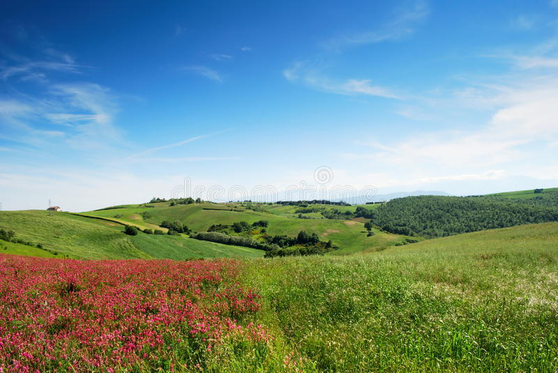 Early summer landscape. From center Italy with cultivated fields and blue sky stock photography