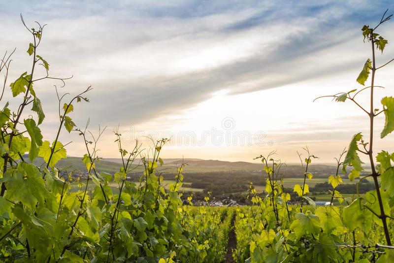 Early summer landscape in Champagne, France royalty free stock photo