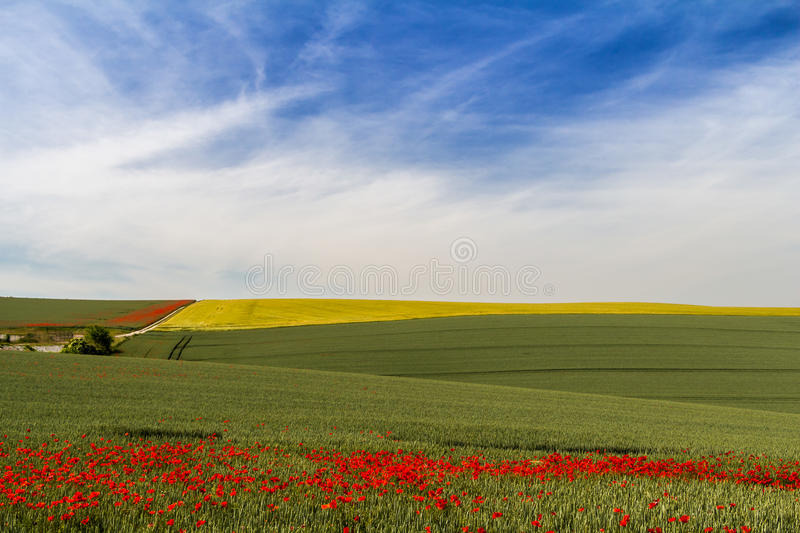 Early summer morning in Champagne, France royalty free stock images