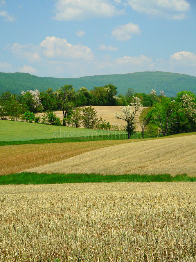 Download Early Summer Pastures stock image. Image of agriculture - 184493