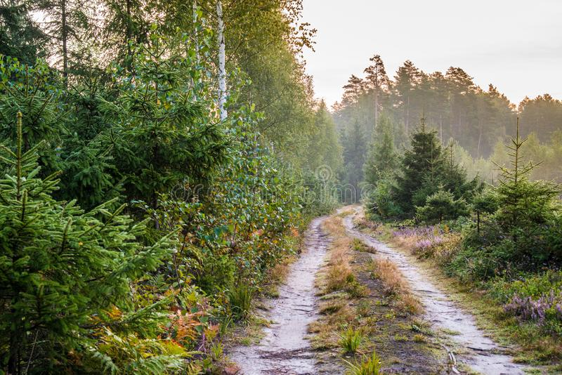 Sunrise in forest, road view stock photos