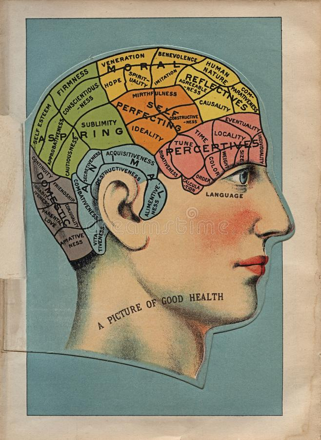 Early 20th Century Brain Area Illustration royalty free stock image