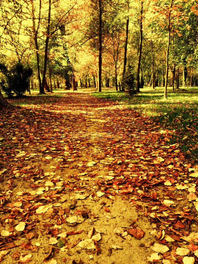 Early winter park path royalty free stock image