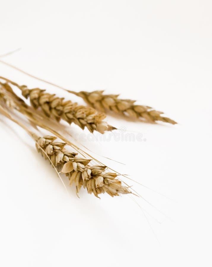 Download Ears stock image. Image of ciabatta, meal, closeups, crop - 11052919