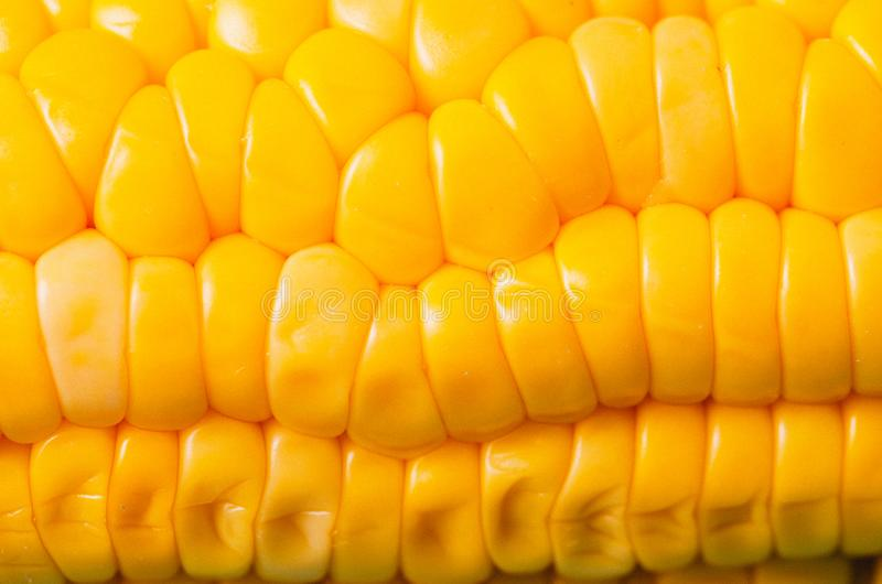 Ears of boiled appetizing corn/vegetarian concept. Close up. Ears of boiled appetizing corn. Healthy food royalty free stock photos