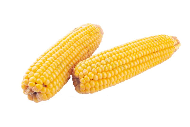 Ears of boiled corn on a white background isolate royalty free stock images