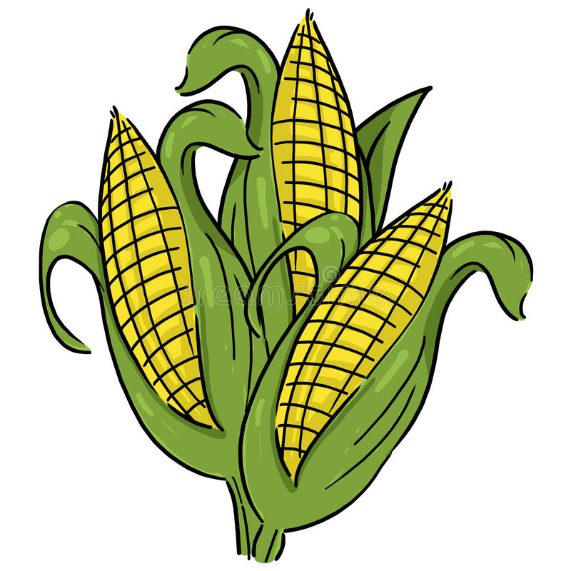 Download Ears Of Corn Illustration Stock Photo - Image: 23855420