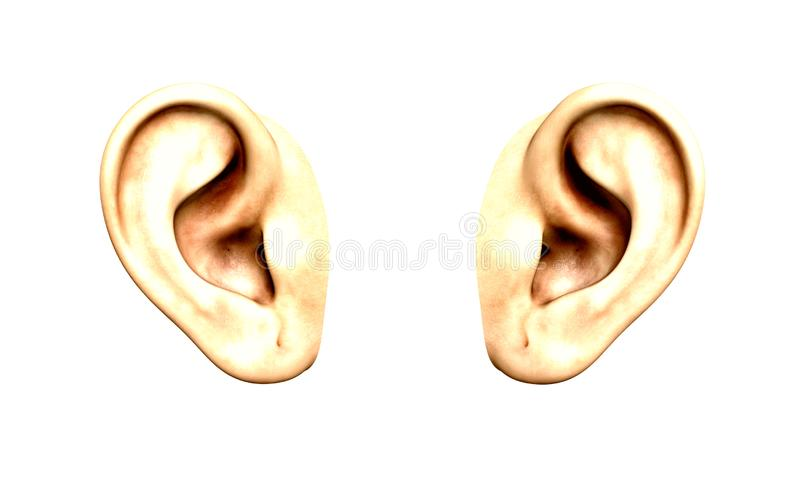 Ears isolated on white. PAir of human ears side by side on white background royalty free illustration