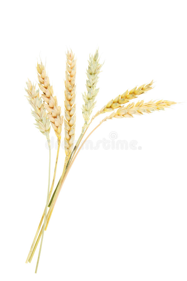 Free Ears Of Wheat Stock Photo - 10762730