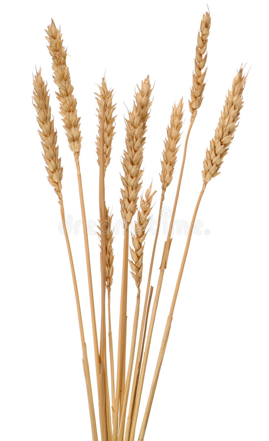 Free Ears Of Wheat Stock Photography - 2004862