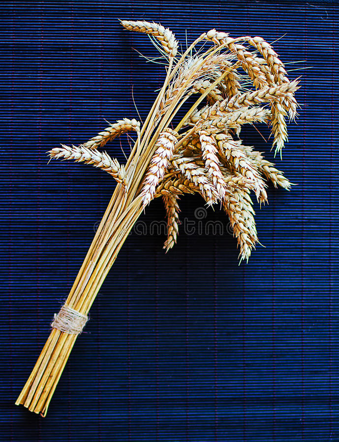 Ears of rye and wheat growing royalty free stock images