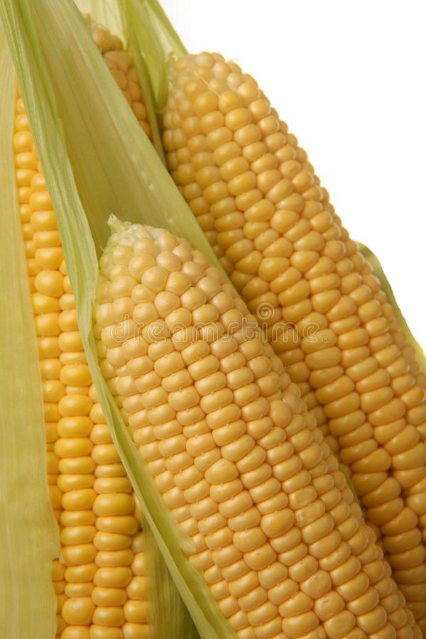 Ears of sweet corn royalty free stock images