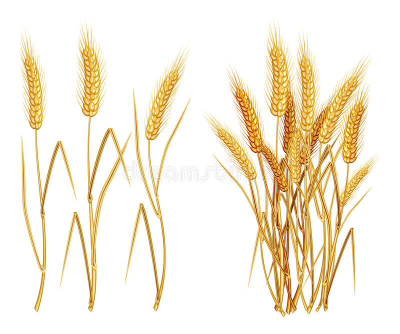 Ears of wheat royalty free illustration