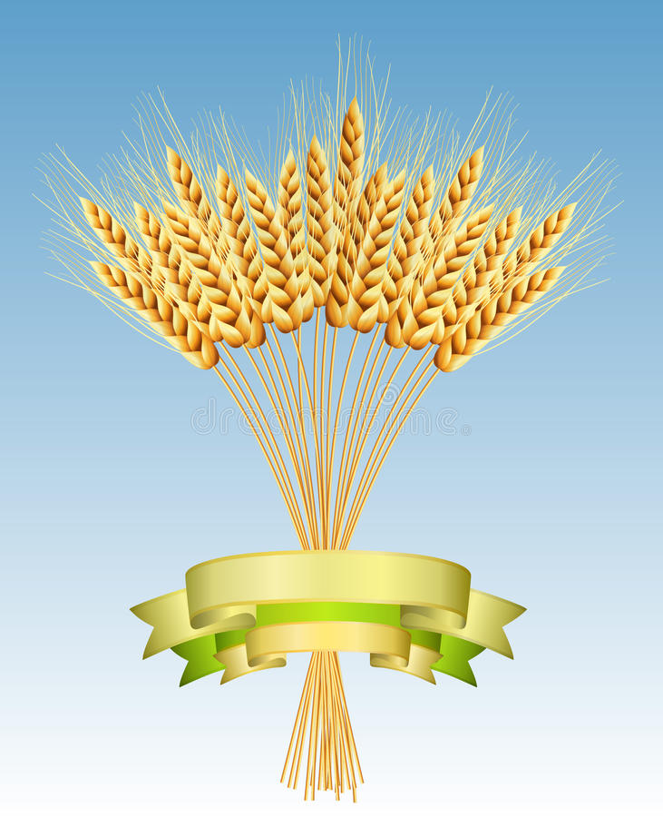 Download Ears Of Wheat Royalty Free Stock Image - Image: 15531986