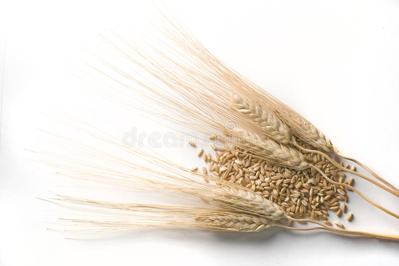 Download Ears of wheat stock image. Image of white, cereal, corn - 16797635
