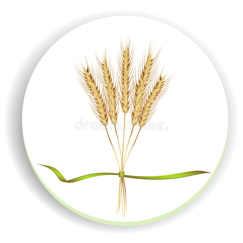 Download Ears of wheat stock vector. Image of ribbon, straw, foodstuff - 18426069