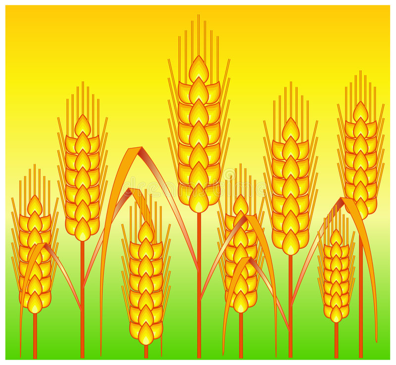 Download Ears Of Wheat Stock Photo - Image: 5529550