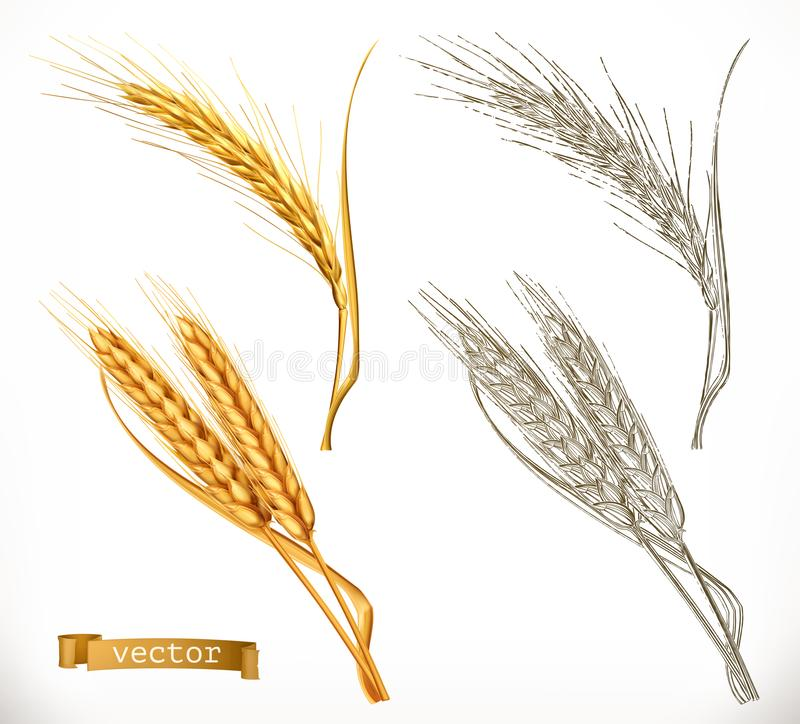 Ears of wheat. 3d realism and engraving styles. Vector. Illustration vector illustration