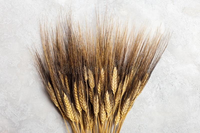 Ears of wheat on gray background royalty free stock photos