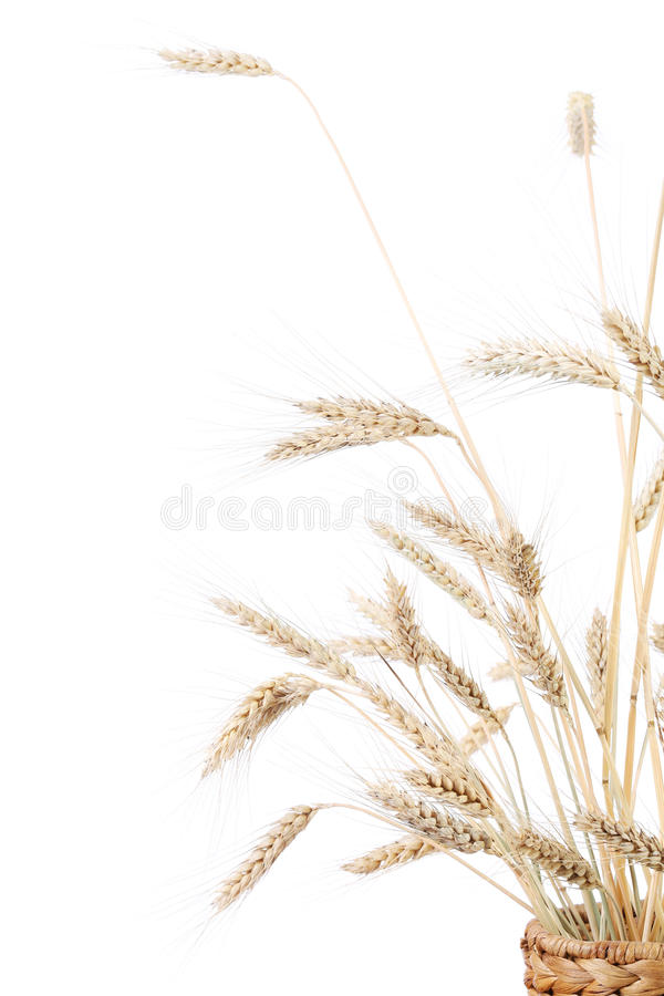 Ears of wheat. stock photo