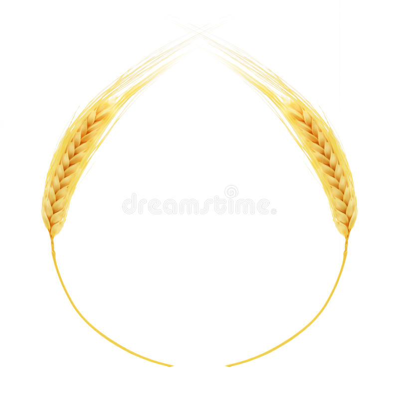 Ears of wheat isolated on white background royalty free stock photo