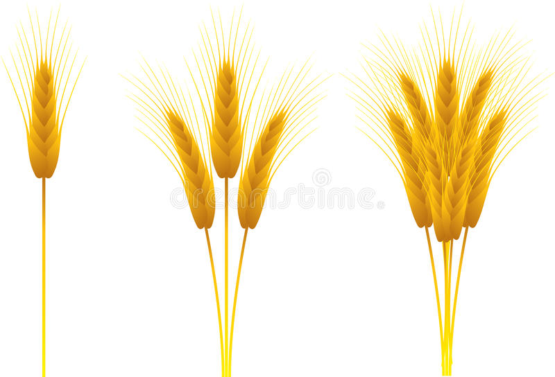 Ears of wheat. Set of ears of wheat vector illustration